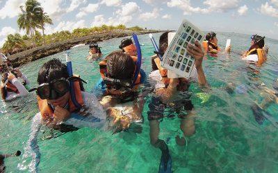 La Fundación de Parques y Museos de Cozumel monitorea peces arrecifales en la laguna de Chankanaab
