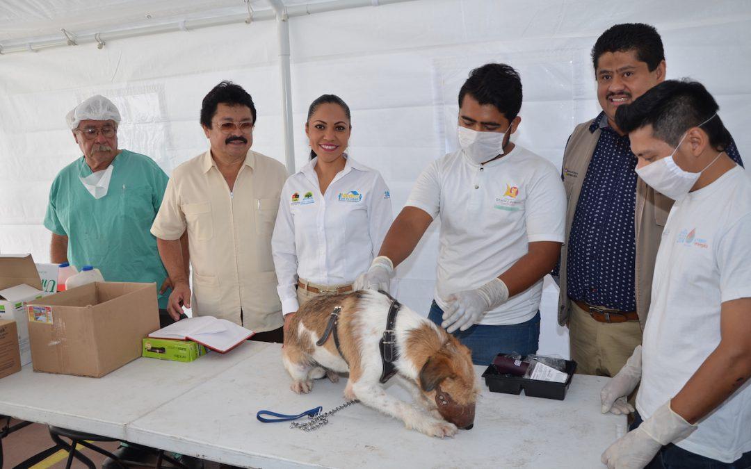 Arranca la Semana Nacional de Vacunación Antirrábica Canina y Felina con la meta de aplicar más de 134 mil dosis