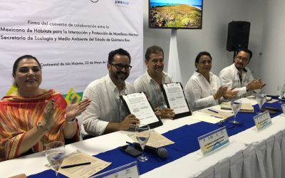 Celebran convenio para la conservación de mamíferos acuáticos en Quintana Roo