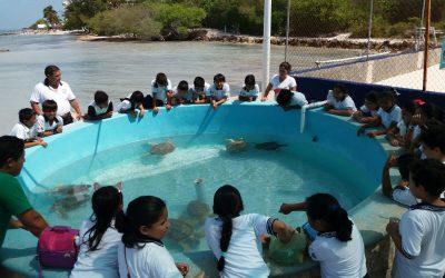Cierra con éxito la semana estatal de la tortuga marina