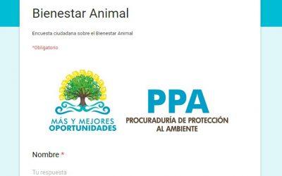 La Procuraduría de Protección al Ambiente lanza la consulta sobre bienestar animal