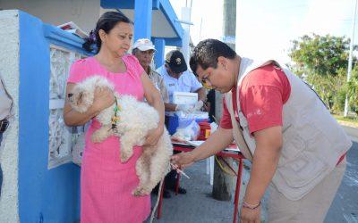En el norte del estado, se prevén vacunar a ocho mil mascotas