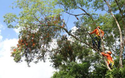 Carlos Joaquín propicia la conservación del Medio Ambiente y genera empleos